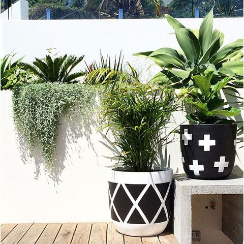 design-twins-black-and-white-pots-plants