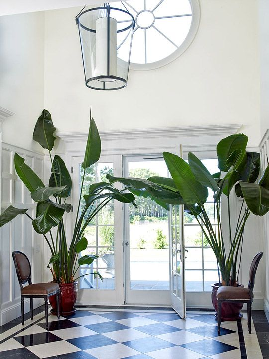 hamptons-inspired-design-oversized-plants
