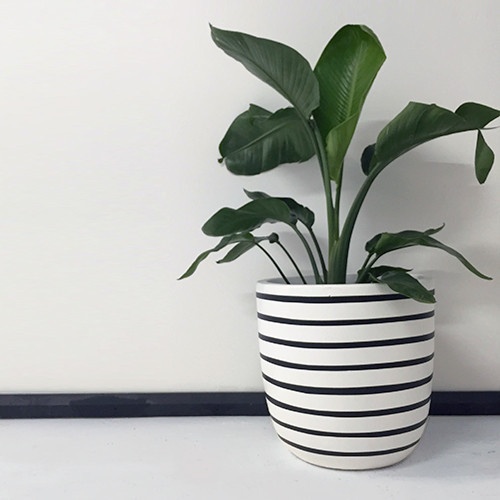 design-twins-lightweight-pots-hand-painted-pinstripe