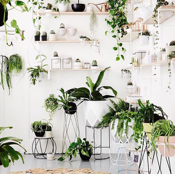 hanging-plants-indoor-styling-green