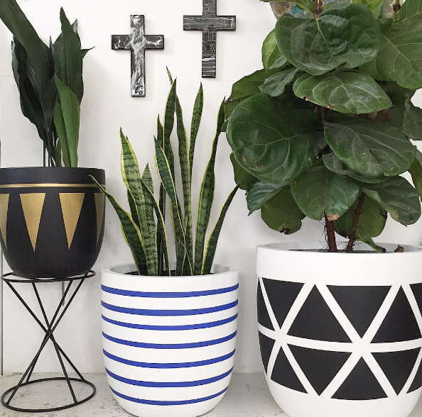 mix-and-match-indoor-plants