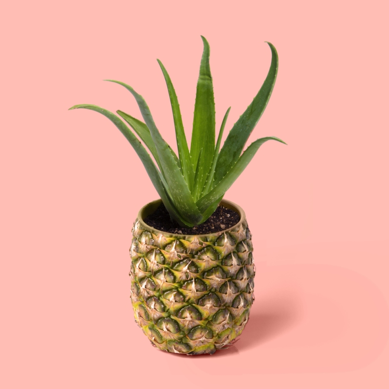 paul-fuentes-pop-art-pinapple-plant.jpg