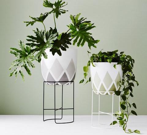 Chameleon Plant Stand