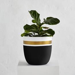 Royal Pot