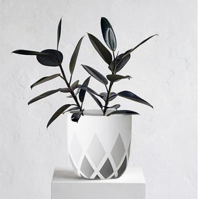 Harlequin Pot